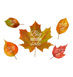 Autumn sale fall leaves banners realistic vector