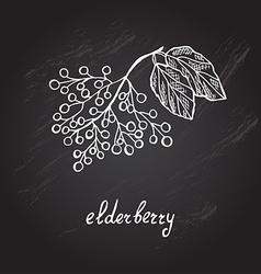 Hand drawn elderberry vector