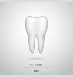 realistic 3d tooth vector image