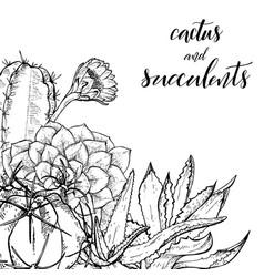 Sketch linear cactus ans succulents vector