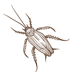 titan beetle insect top view hand drawn sketch vector image
