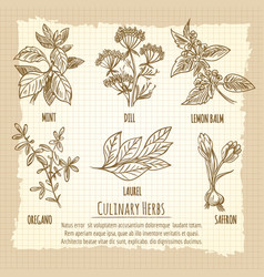 Vintage culinary herbs information poster design vector