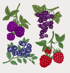 hand drawn sketch berries set with blackberry vector image vector image