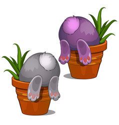 Bunny looking for something in flower pot vector