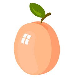 fresh apricot on white background vector image