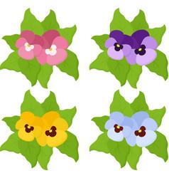 pansy flowers or spring garden viola tricolor vector image