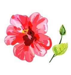 Red watercolor Hibiscus flower vector
