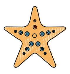 Starfish tropical summer icon vector