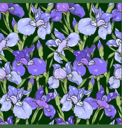 iris flowers vector image