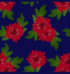 Red chrysanthemum on navy blue background vector