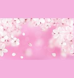 blossoming light pink sakura flowers vector image