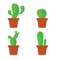 Cactus in pots color vector