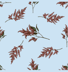seamless pattern with hand drawn colored astilbe vector image