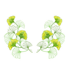 Symmetrical pattern colorful leaves ginko vector