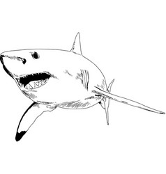 a shark drawn in ink on a white background vector image