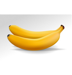 bunch of bananas isolated on transparent vector image