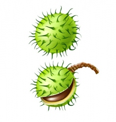 Chestnut seed fruits isolated vector