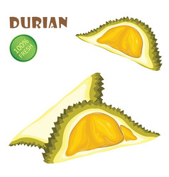 Durian and peel on a white background vector