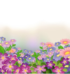 A garden of colorful flowers vector image