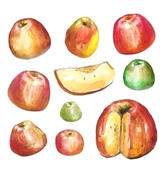Apples painted with watercolors on white paper vector