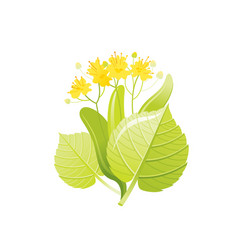 Linden tree honey flower floral icon realistic vector