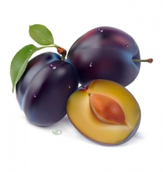 plum and leaf pattern vector image