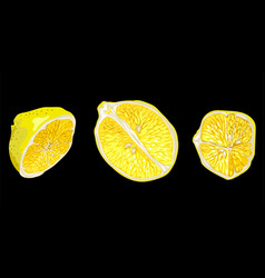 Set with parts of lemon fruit in different forms vector
