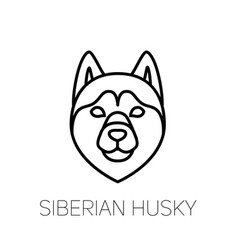 Siberian husky linear face icon isolated outline vector