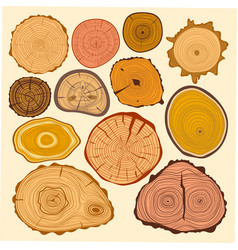 wood slice texture tree circle cut raw material vector image