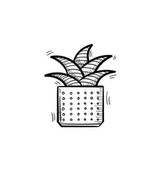 mother-in-law tongue plant in a pot sketch icon vector image vector image