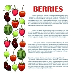 Berries infographic with berry icons vector image