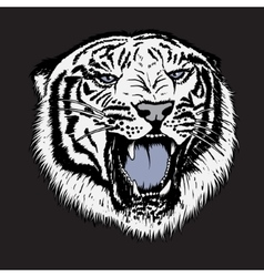 Head of white tiger vector