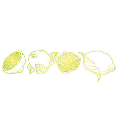 lemon line made in vintage pet style there are vector image