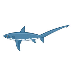 thresher shark fish on a white background vector image