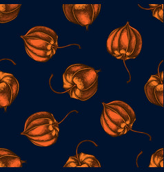 seamless pattern with hand drawn colored physalis vector image