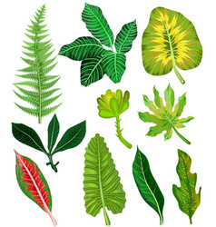 colorful and exotic set of tropical leaves vector image vector image