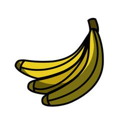 delicious banana fruit to healthy life vector image vector image