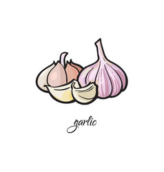 garlic bulb and cloves with ledend vector image