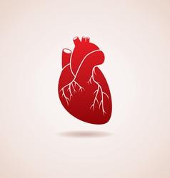 human heart vector image vector image