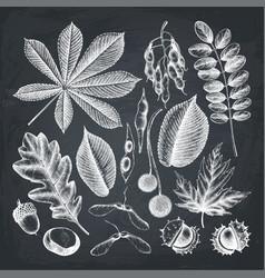 Autumn collection on chalkboard vector