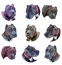 Background with pitbulls vector