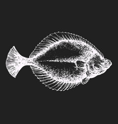 Hand drawn flounder fish on chalk board vector