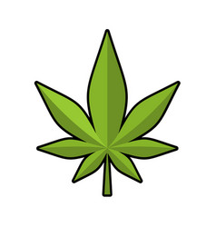 Leaf marijuana green cannabis leaflet ganja vector