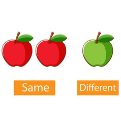 Opposite adjectives words with same and different vector