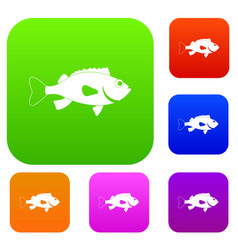 Sea bass fish set color collection vector
