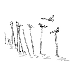 Seagull standing vector