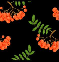 Seamless pattern with rowan berries vector