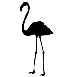 silhouette of flamingo vector image
