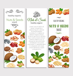 template with nuts and seeds vector image