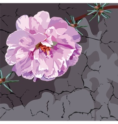 Beautiful Watercolor Pink flower vector image vector image